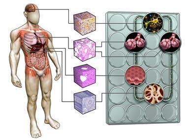 Medical company illustration