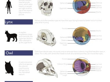 Zoology Museum Information Sheet: Orbits
