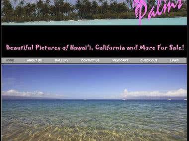 Palms Photography