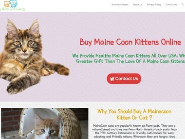 My Maine Coon Cattery - A Pet Buying Website