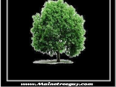 Maine Tree Service