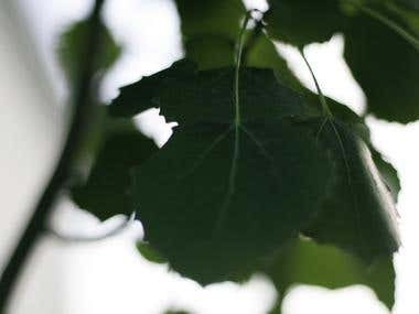 Artistic Leaves