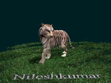 Tiger_walk