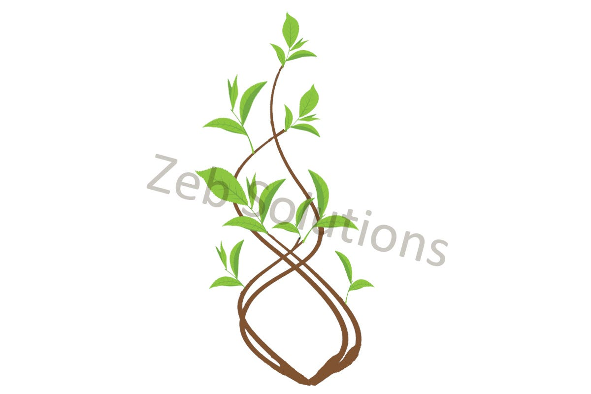 Tea Plant Illustration