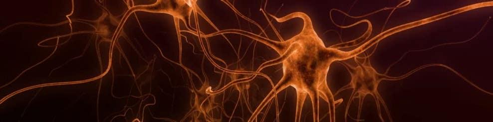 Neuron Forest Trip