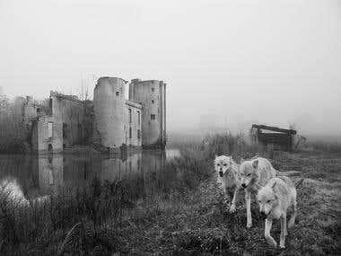 Wolves & Azure