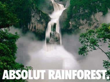 Absolut Rainforest