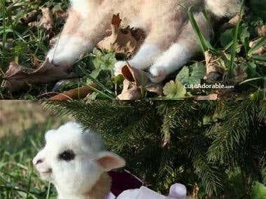Baby Llama Stormtrooper