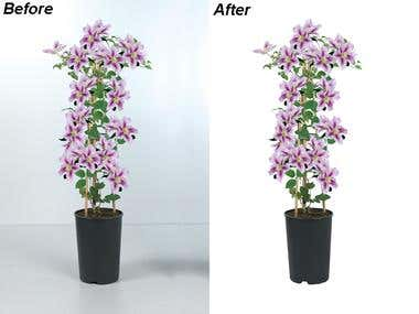 CLIPPING PATH OF PLANTS