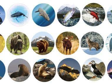 Vectors: Animals, Planes, Ships Etc...
