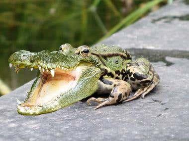 Crocfrog