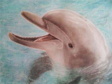 Dolphin Sketch