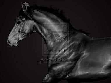 Horse - Graphite