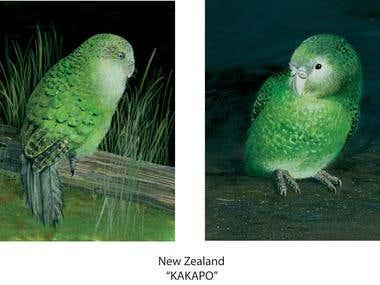 Rare Bird illustrations