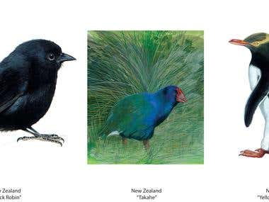 Detailed rare bird illustrations