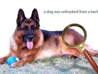 a dog was unhooked from a background