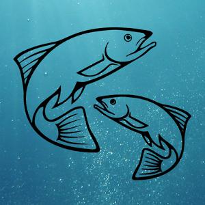Fish Predictor app