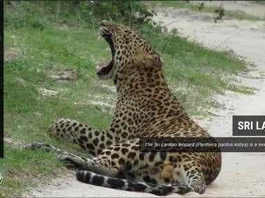 Yala Adventure Safari