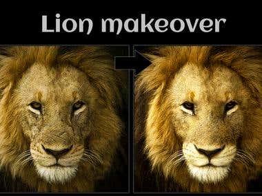Lion makeover