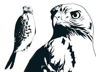 Hawk lineart