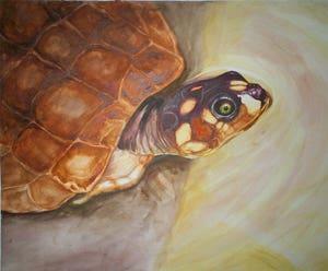 Ilustracion de Tortuga
