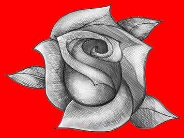 Illustration of a rose flower.