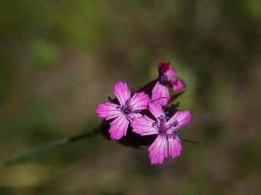 Wild & Purple