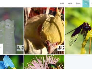 WaatIzz.Com Page Design