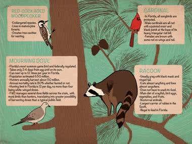 Wildlife Identification
