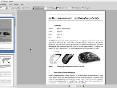 Translation En < Ro - Mediterranean mussel