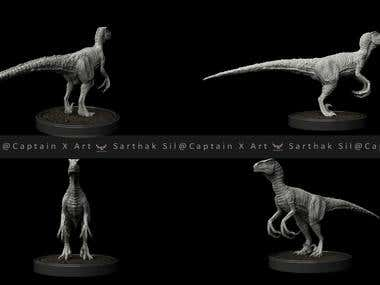 Raptor the bird of prey