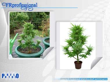 plant image background removing and colour correction