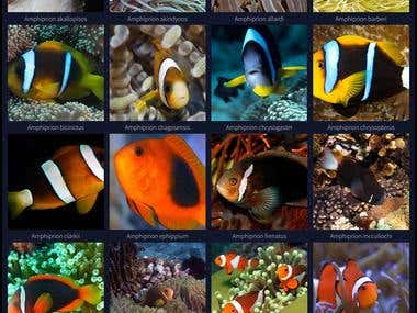Reef Life Series