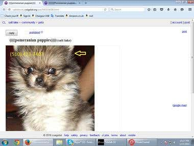 Ads posting on community and pets section in Craigslist.