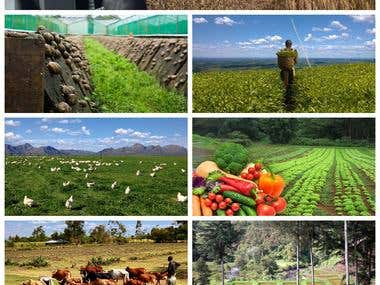 Graphic Design for a Farm Website Landing Page