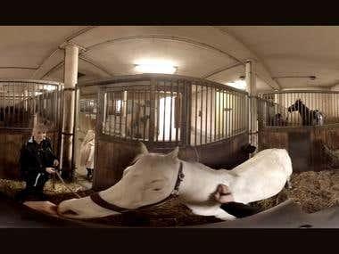Video360 VR - Horse Riding