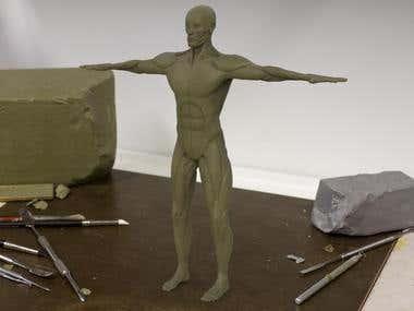 Anatomy body