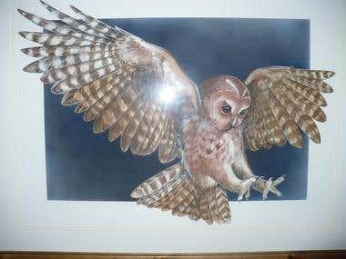 Wildlife exhibition design - Tawny Owl