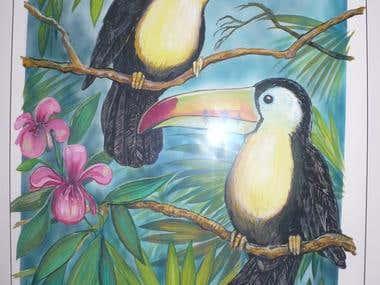 Wildlife Illustration - Birdworld - Toucans
