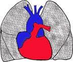 Heart & Lungd