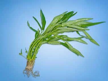 Vegetable (Pakchoy)