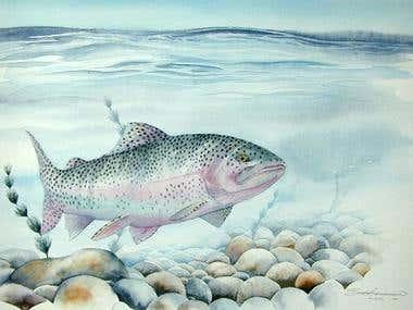 Watercolor Trout