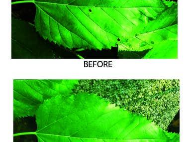 Photoshop & Graphics Design