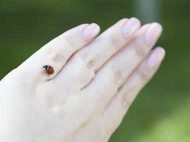 Lady bug, macro photography