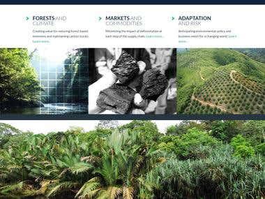 Forest Carbon