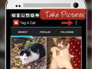 Tag a Cat