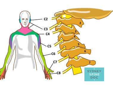 medical terms illustration