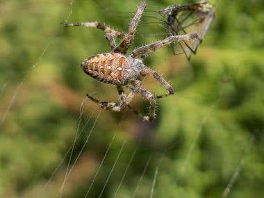 Spider in nature
