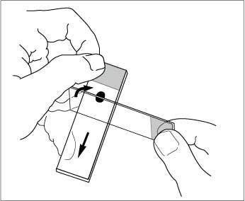 Microscopic slide prep