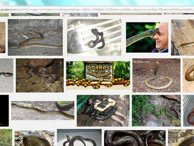 Research Article - Snakes in Philippines